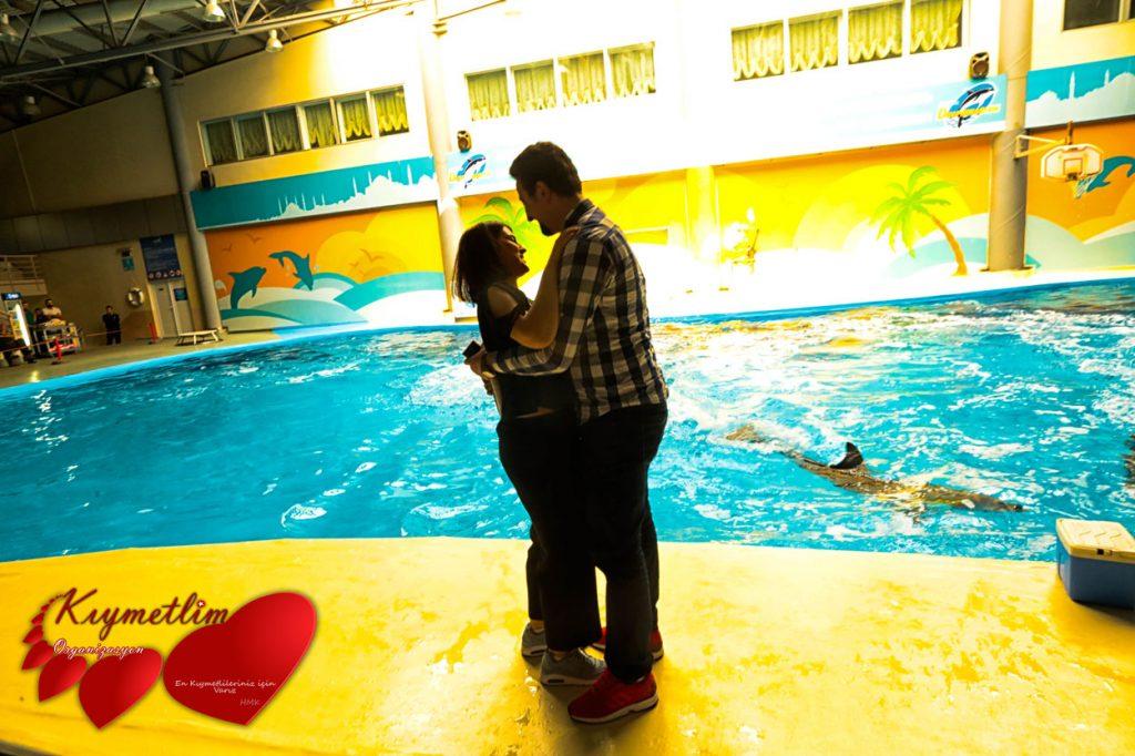 Yunuslarla Evlilik Teklifi